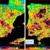 Índice de Vegetación de Diferencia Normalizada correspondiente al 31 de octubre del 2014 (izquierda) y a la misma fecha de este año. Los colores oscuros indican menor actividad fotosintética.