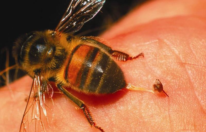 Cómo prevenir las picaduras de avispas y abejas y qué hacer si la ...