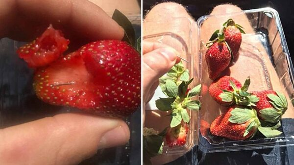 Fresas con agujas en su interior aparecidas en Australia