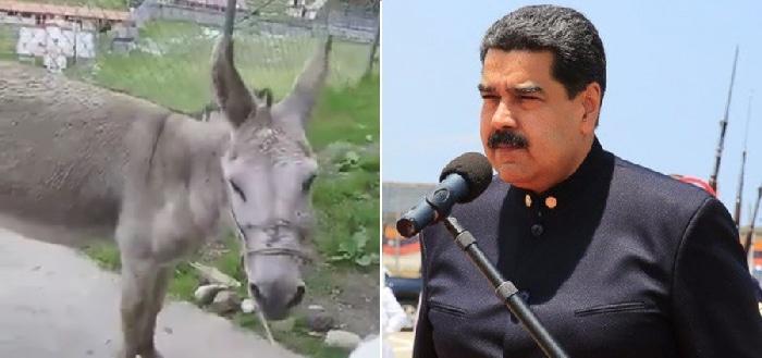Nicolás Maduro y el burro con el que le han comparado