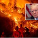 Incendios de California y Trump
