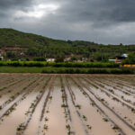 Campos anegados de agua en Orihuela